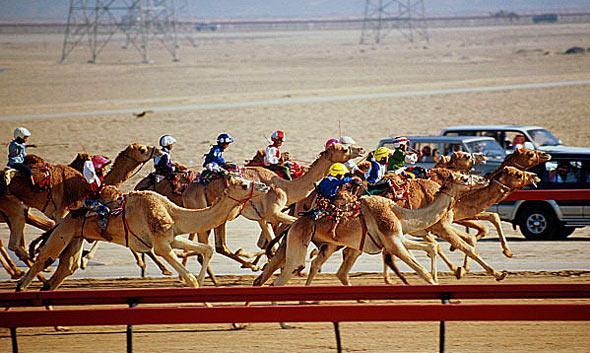 Гонка на верблюдах