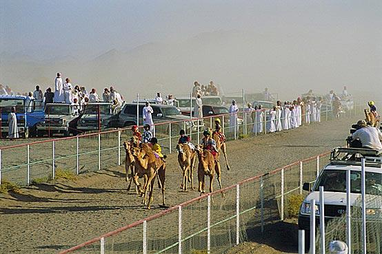 Гонка на верблюдах, Мудайби